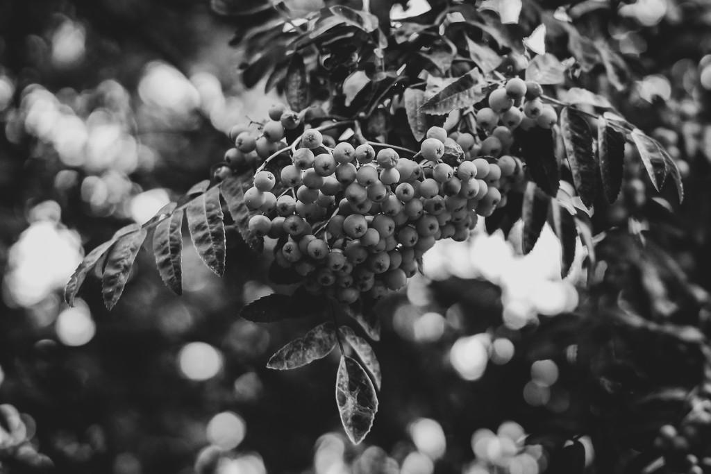 Garden by toinette