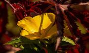 25th Sep 2019 - Yellow Flower!