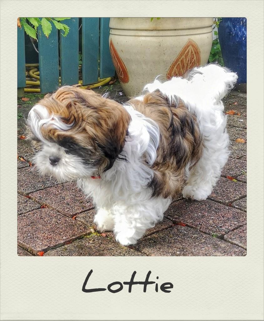 Lottie by jack4john