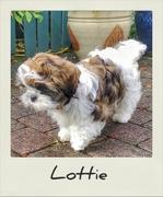 22nd Sep 2019 - Lottie