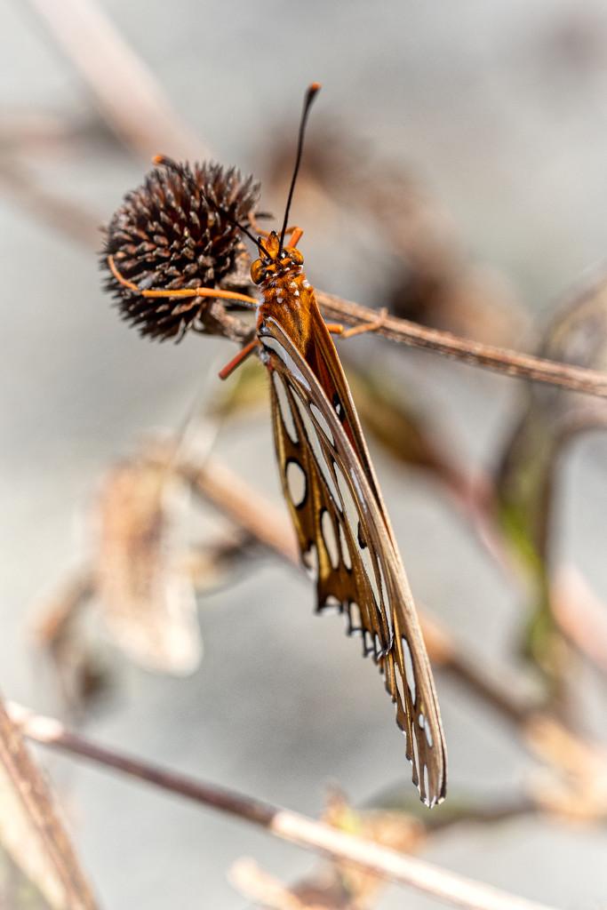 Folded Wings by kvphoto
