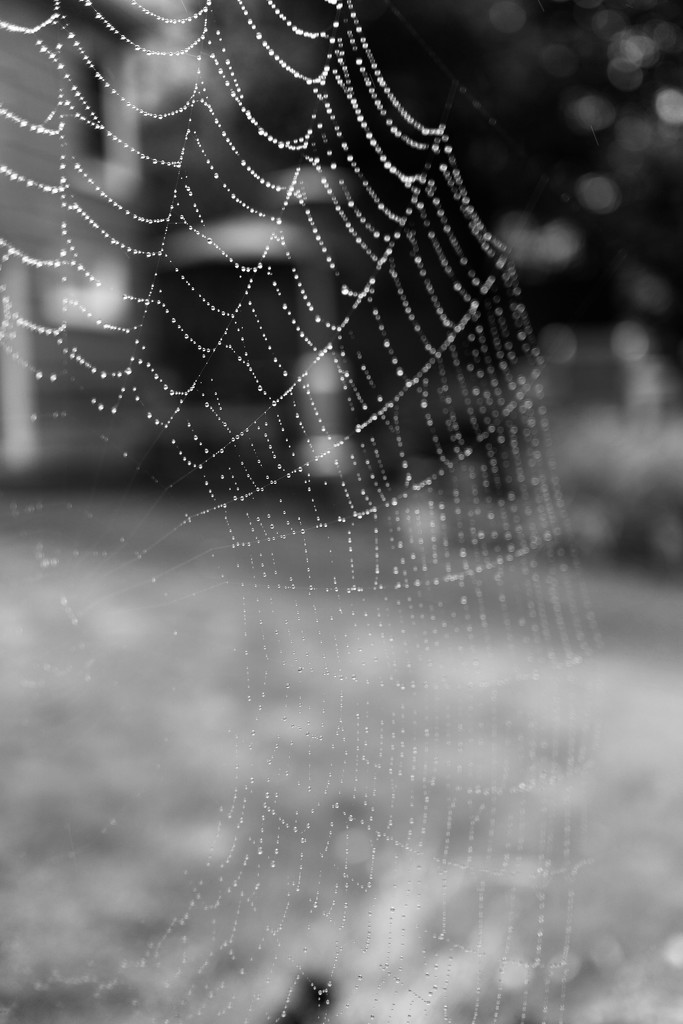 A spider's gift by cristinaledesma33