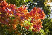 26th Sep 2019 - Autumn colours