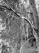 15th Sep 2019 - Tree Tangle