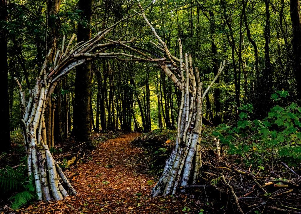 A walk in the woods by bizziebeeme