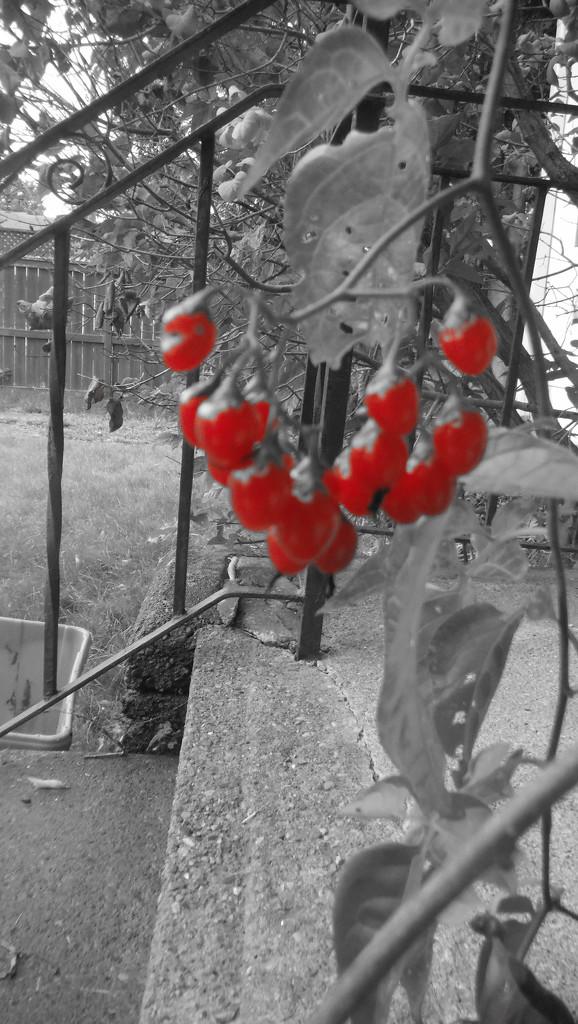 Berries by spanishliz