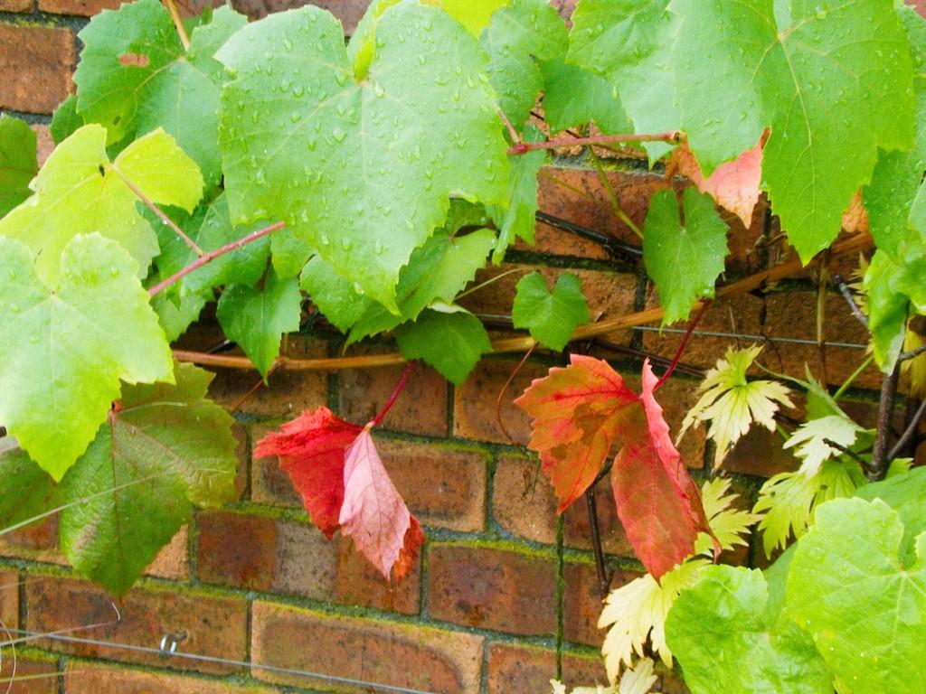 Autumn colours by allsop