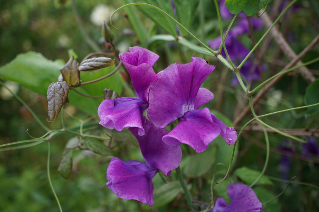 reverting to purple by quietpurplehaze