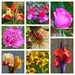 Garden Snapshot by susiemc
