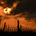 A Halloweenish Sunset by kareenking