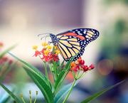 29th Sep 2019 - Monarch