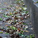 Leaves after the rain by randystreat
