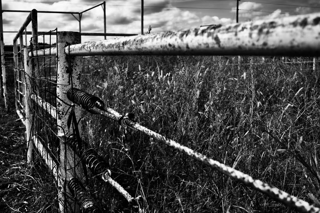 Cattle Fence  by samae
