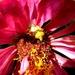 Buba i cvijet