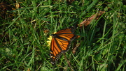 1st Oct 2019 - Butterfly