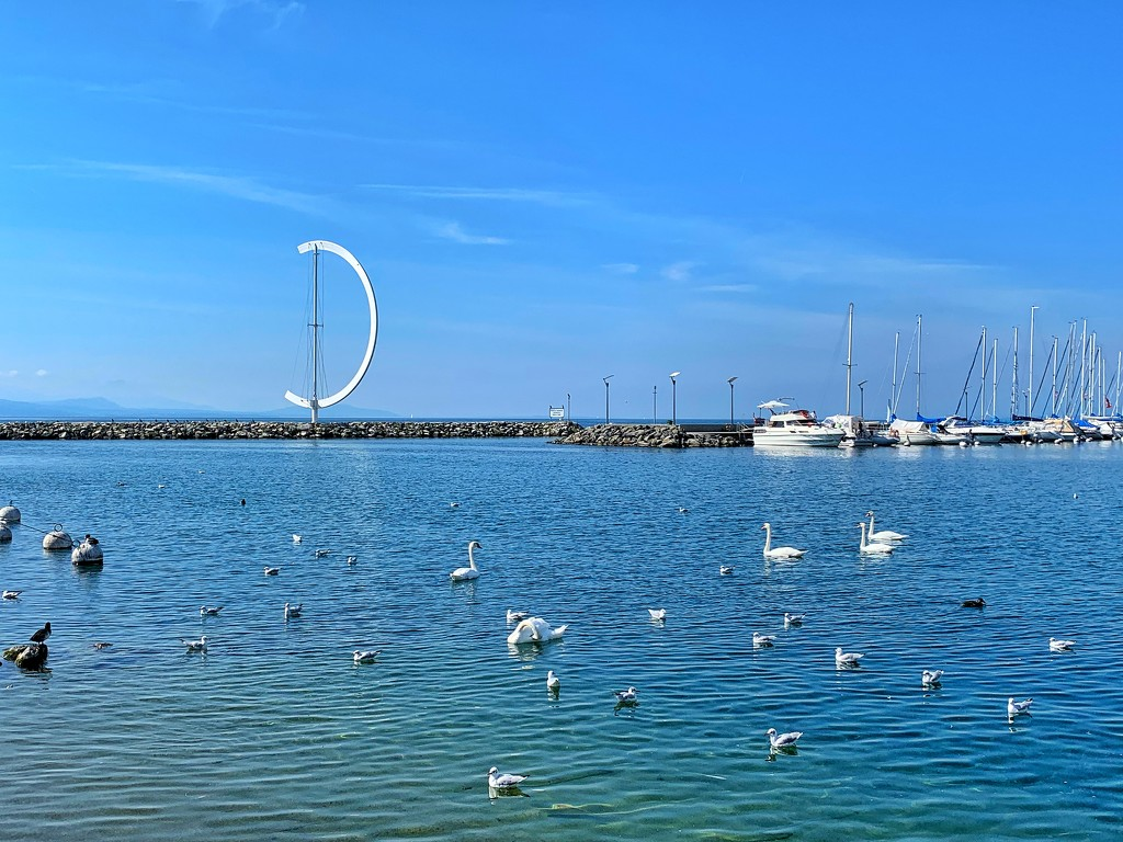 Seagulls and swans.  by cocobella