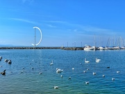 2nd Oct 2019 - Seagulls and swans.