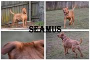 1st Oct 2019 - Seamus collage