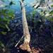 The Work of Beavers I