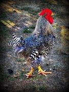 4th Oct 2019 - Chicken Festival