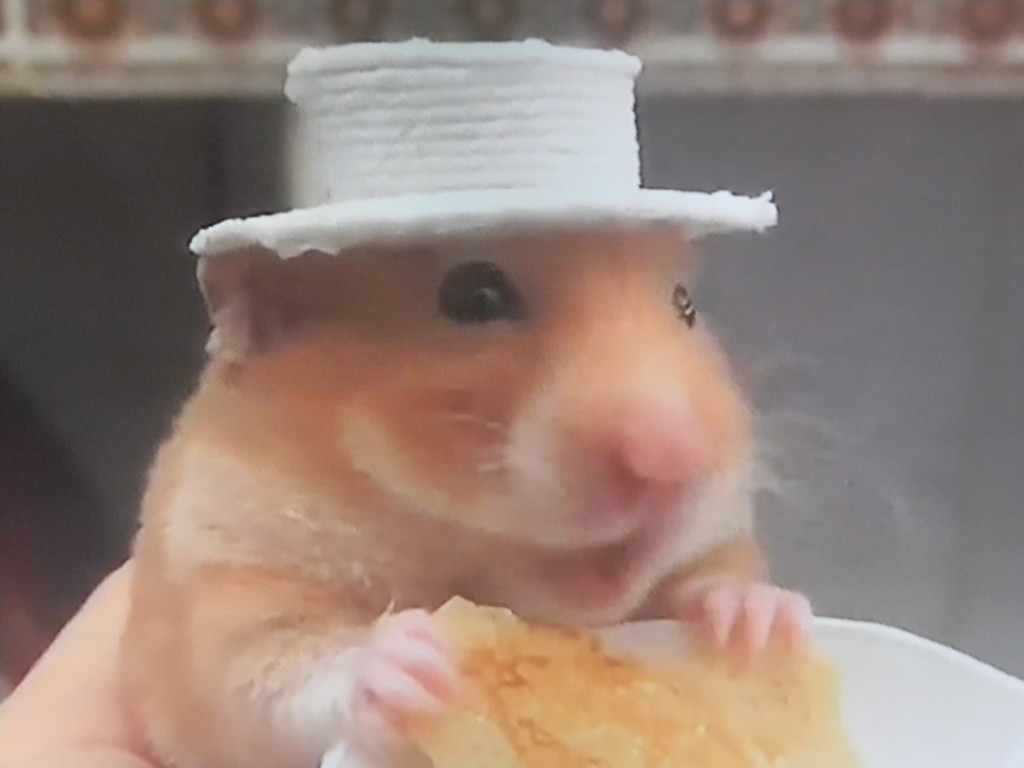 Hamster Eating on TV  by sfeldphotos