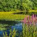 pond in MLK park in morning