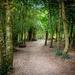 The path by swillinbillyflynn