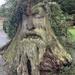 Stumpy by phil_sandford