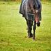 Horse in field....