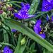 Bee polinating purple flowers