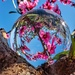 Blossoms in the lensball by ludwigsdiana