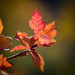 """Every leaf speaks bliss to me"" -- Emily Brontë by lindasees"