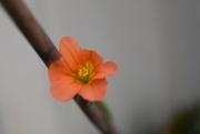 1st Oct 2019 - Flower