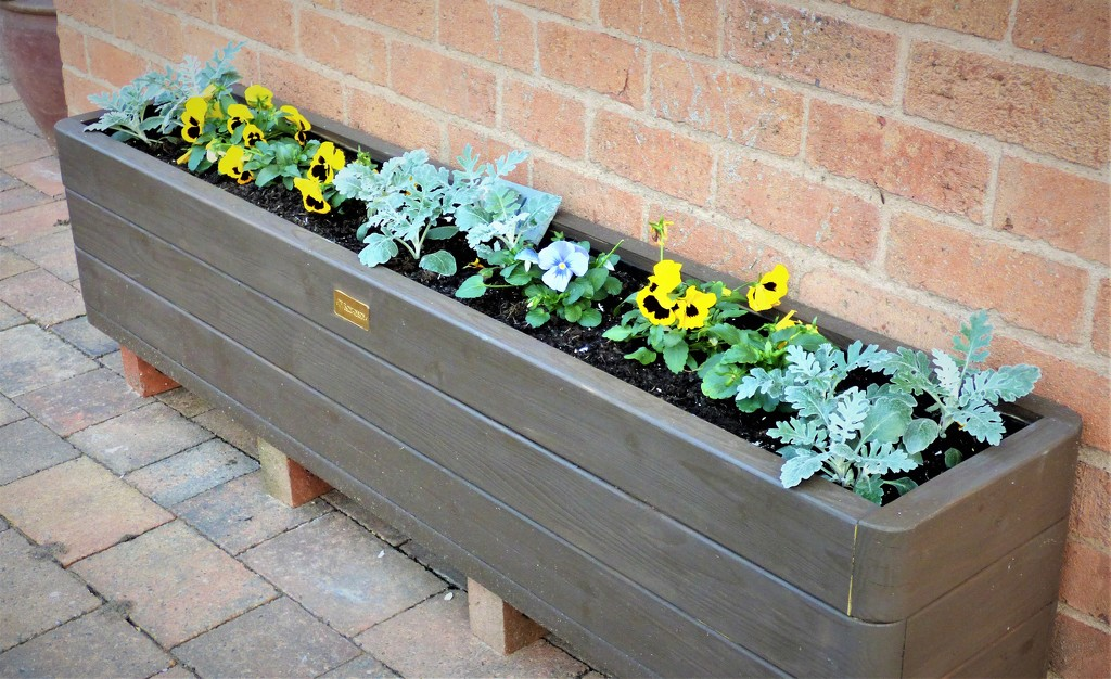 Planted for winter  by beryl