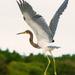 bird in flight! by jernst1779