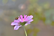 4th Oct 2019 - Pink flower and visitor........