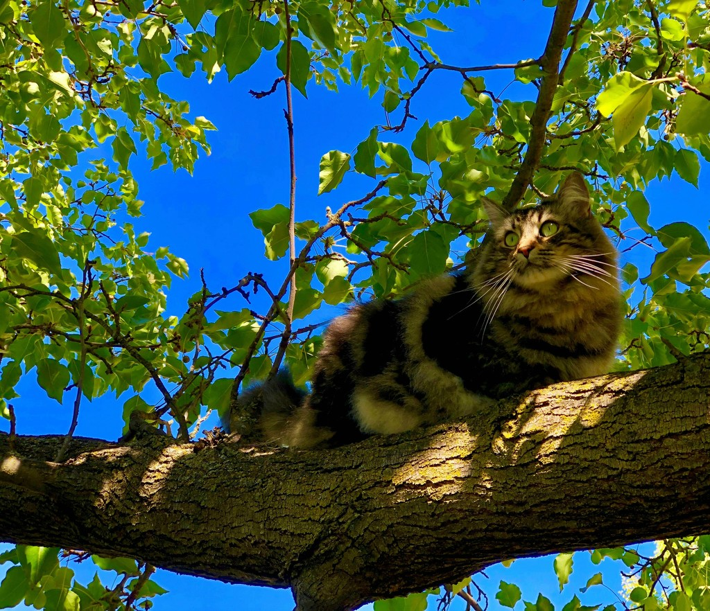 Climbing More Trees by gardenfolk