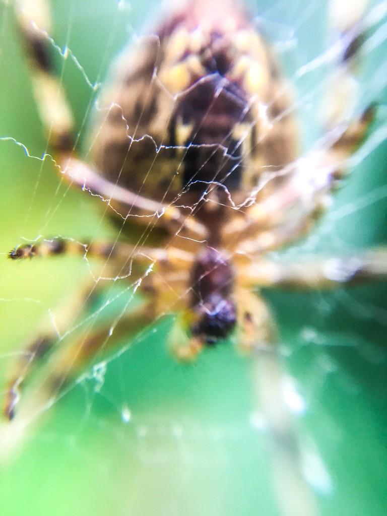 Spider by imnorman