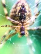 5th Oct 2019 - Spider
