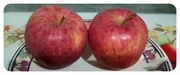 5th Oct 2019 - Two Gala Apples