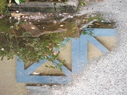 5th Oct 2019 - Puddle
