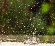 6th Oct 2019 - Rain
