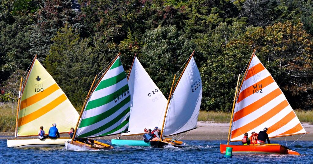 Beetlecat sailboats racing today. by sailingmusic