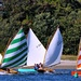 Beetlecat sailboats racing today.