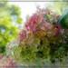 Hydrangea Dreams by olivetreeann