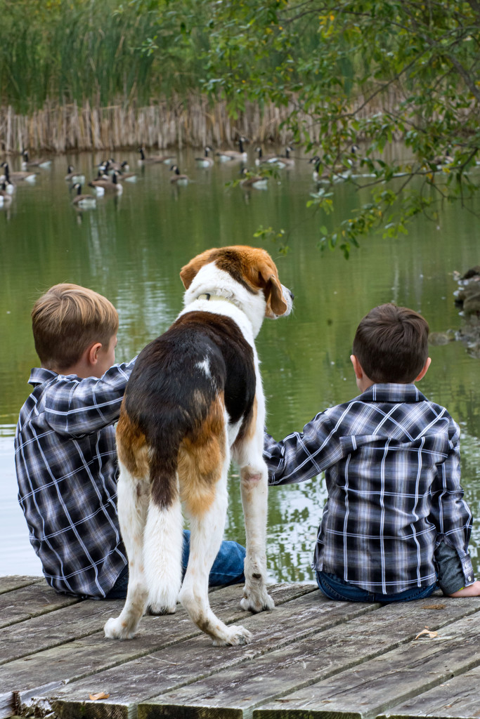Watching the Geese by farmreporter