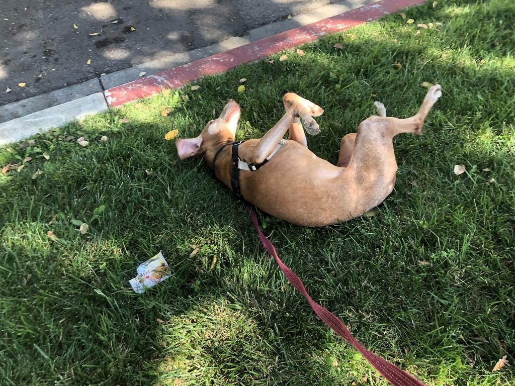 Rolling in the grass by loweygrace