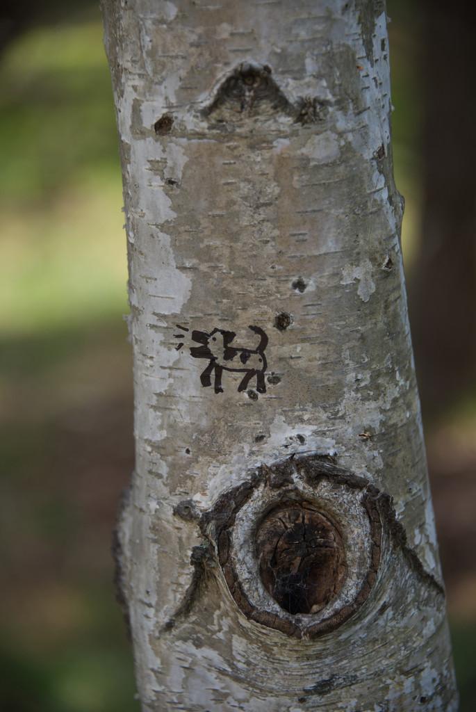 graffiti bark ! by fr1da