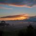 Mist over Te Kauwhata