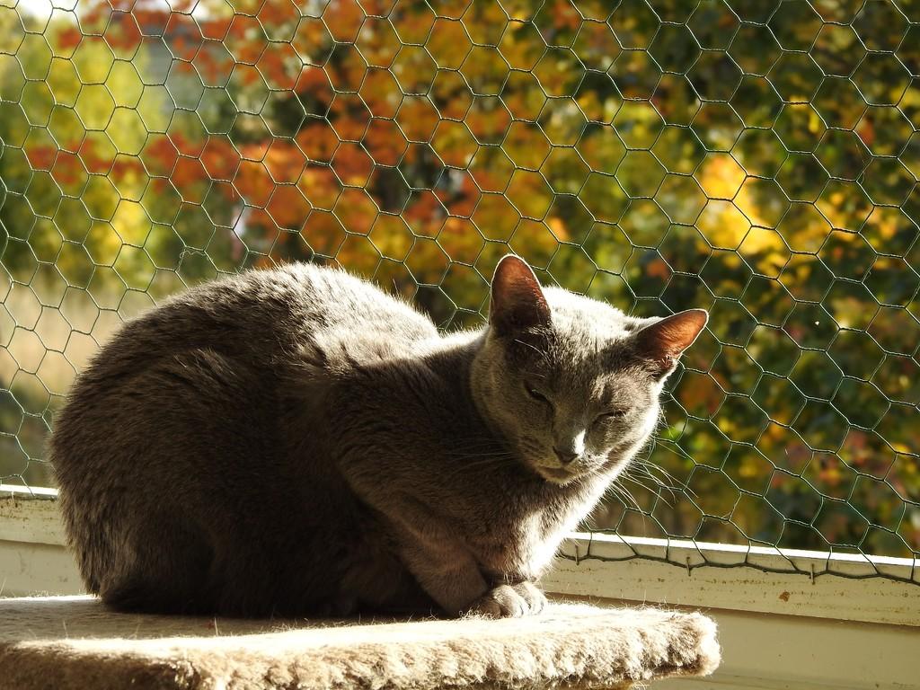 Duchess and autumn by katriak